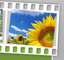 Zisel - medjunarodni festival amaterskog filma i fotografije